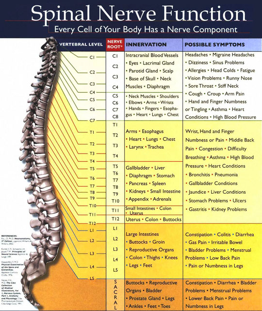 Castle Hill Chiropractor
